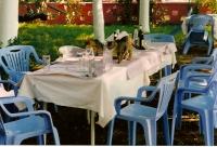 0700 - Dopo il pranzo i gatti controllano se e' rimsto qualcosa - Giu-1996.jpg
